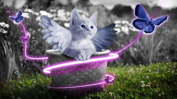 cat-755812_1280